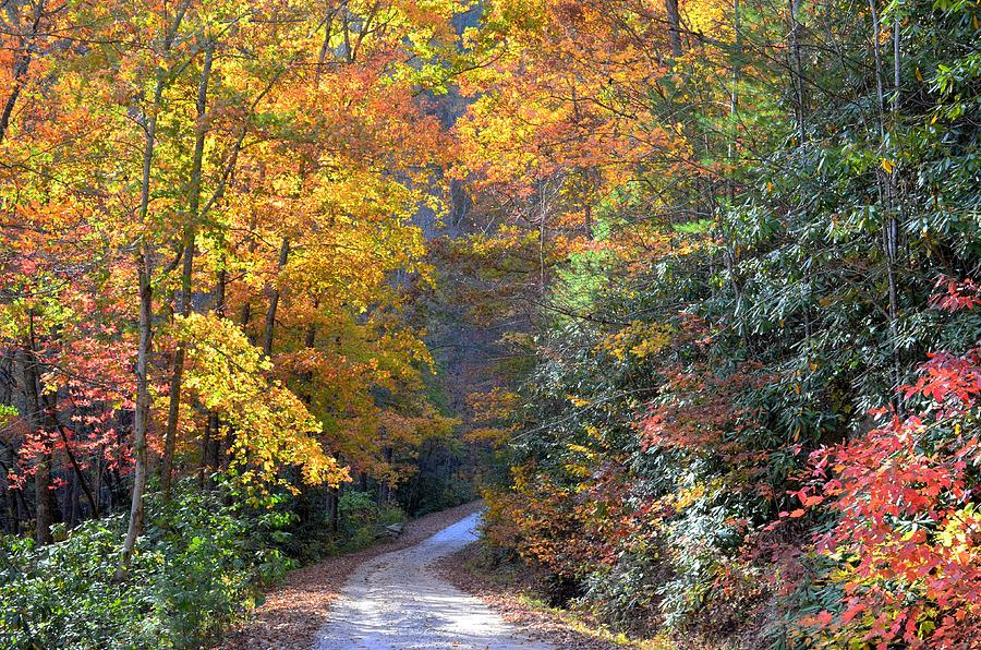 Autumn Photograph - Lost Road by Bob Jackson
