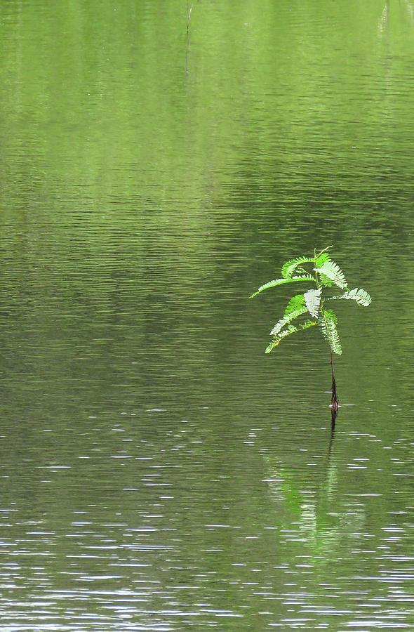 Plant Photograph - Lost by Rosalie Scanlon