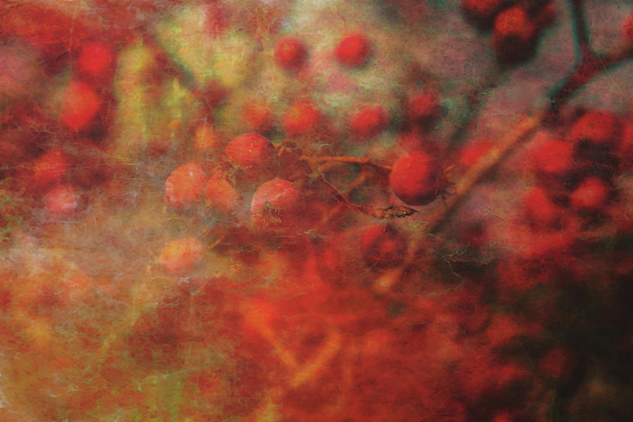 Lost Photograph - Lost Vintage Crabapples 5942 Ldp_2 by Steven Ward