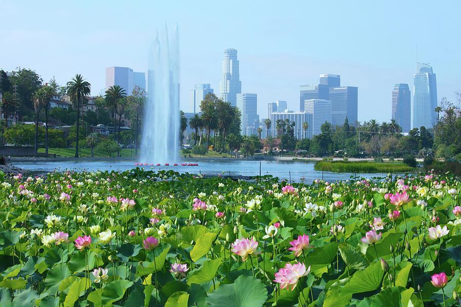 Lotus Blooms And Los Angeles Skyline Photograph By Ram Vasudev