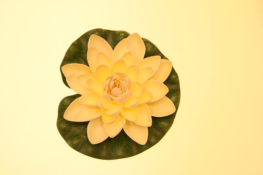 Flower Photograph - Lotus by Deepak Pawar