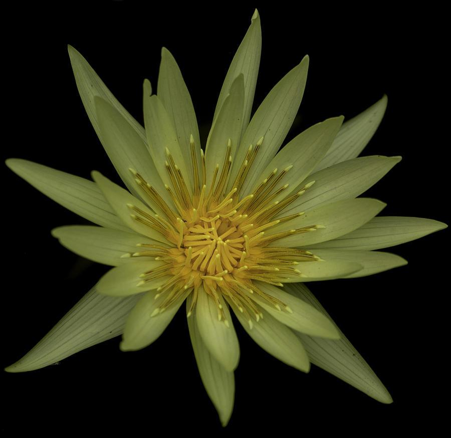 Lotus Flower Photograph By Greg Thiemeyer
