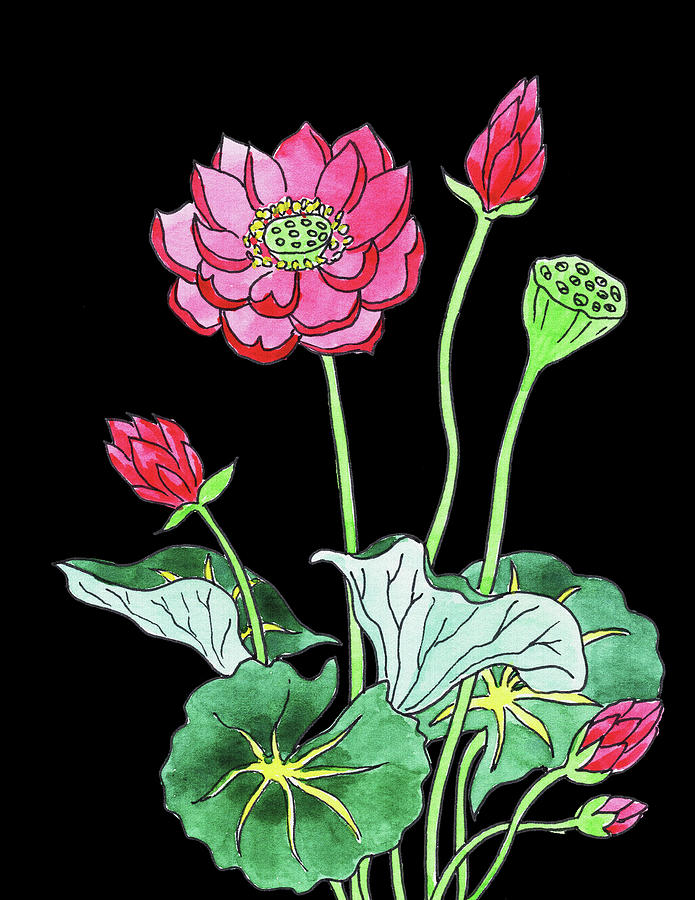 Lotus Flower Watercolour Painting By Irina Sztukowski