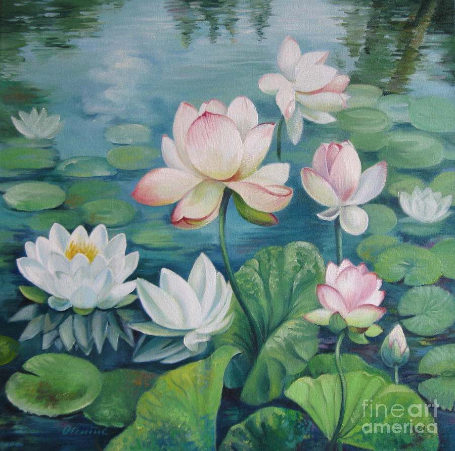 lotus flowers painting by elena oleniuc