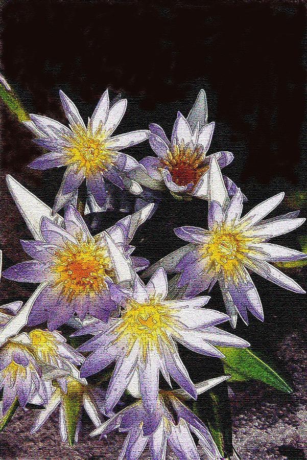 Lotus Digital Art - Lotus Flowers by Sherry Oliver