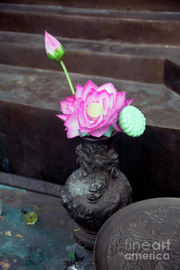 Lotus Flowers Vase Hanoi Photograph By Chuck Kuhn