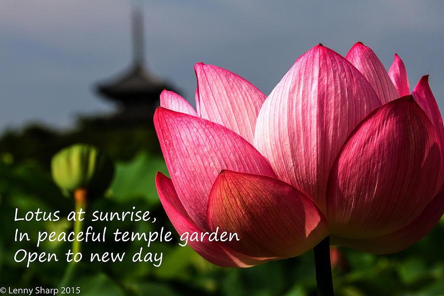 Lotus Photograph - Lotus - Haiku by Leonard Sharp