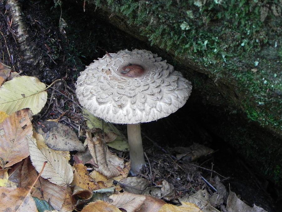 Lotus Photograph - Lotus Mushroom by John Parry