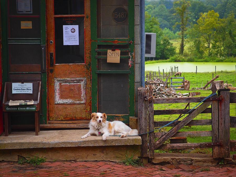 Virginia Photograph - Loudoun Times by Skip Hunt