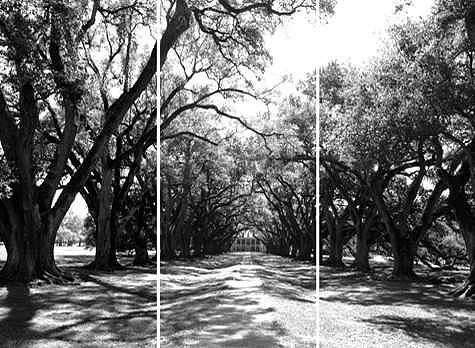 South Photograph - Louisiana Plantation by William Love