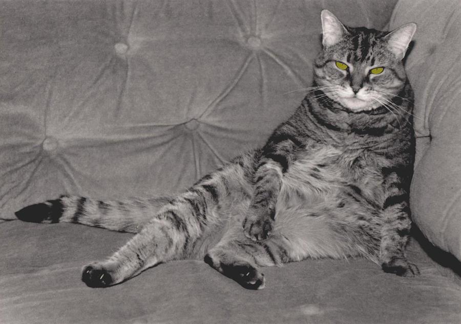 Cat Photograph - Lounge Cat by Joy McKenzie