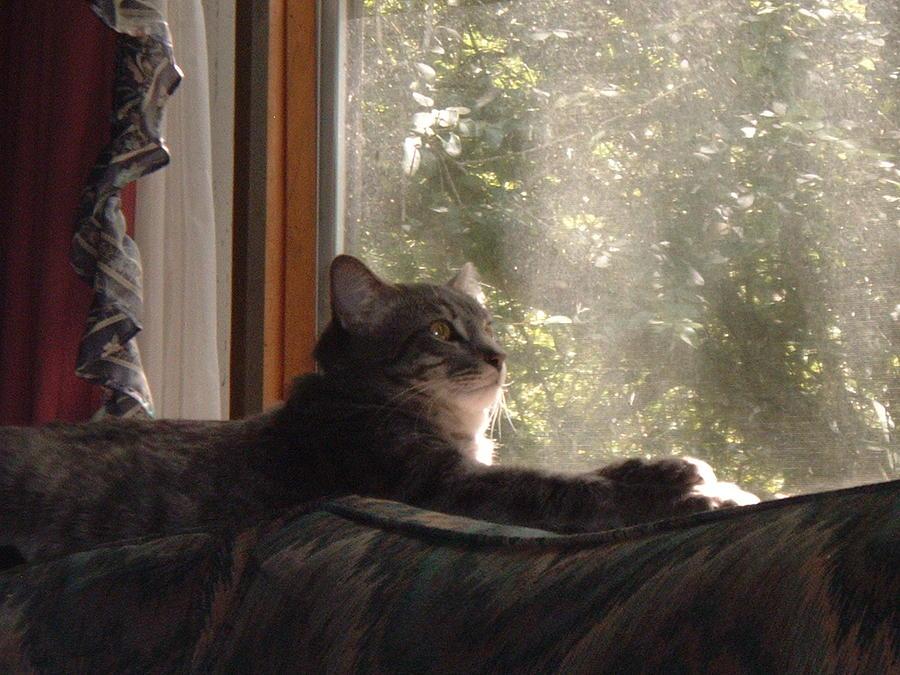 Cat Photograph - Lounging In The Autumn Sun by Amanda Shelburne