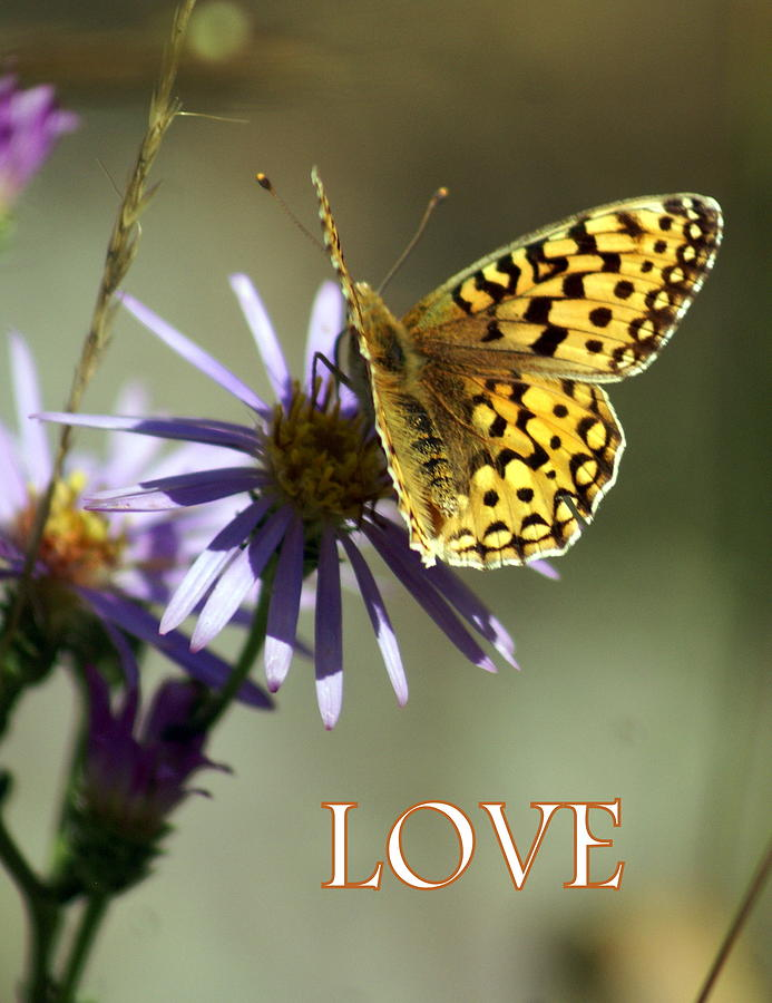 Love Greeting Card - Love 1 by Marty Koch