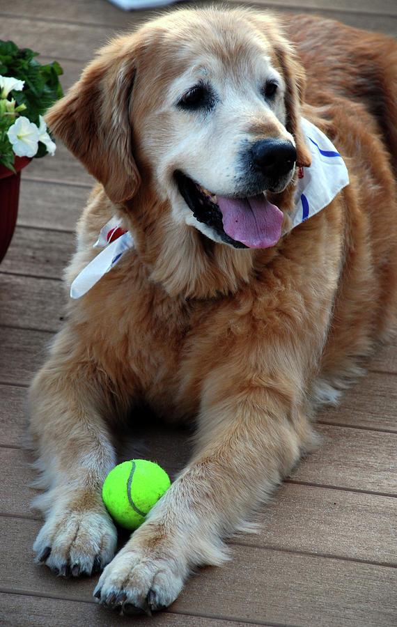 Dog Photograph - Love 15 by Skip Willits