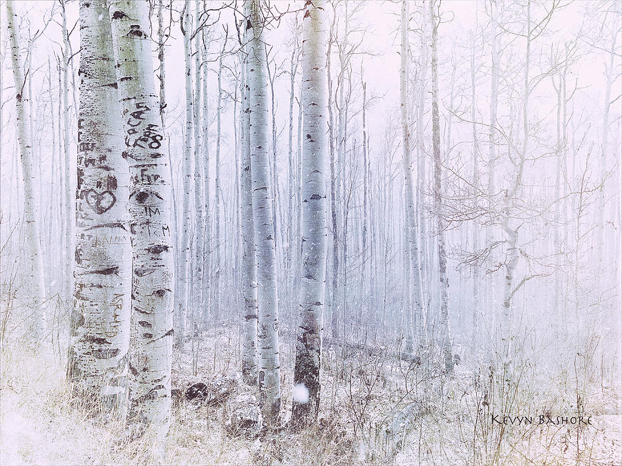 Landscape Photograph - Love Amidst The Aspens by Kevyn Bashore