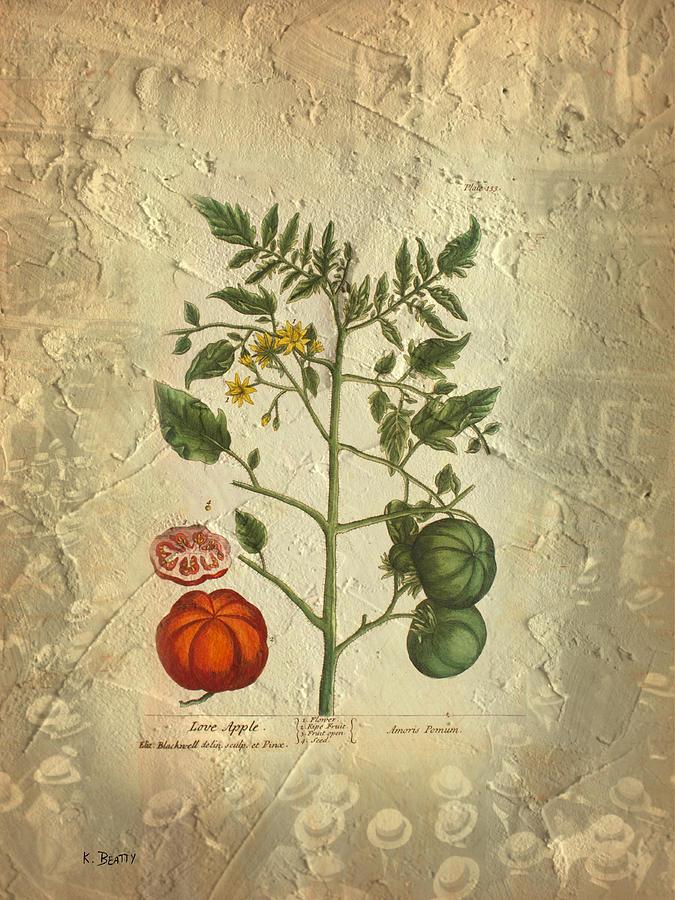 Botanical Photograph - Love Apple Botanical  by Karla Beatty