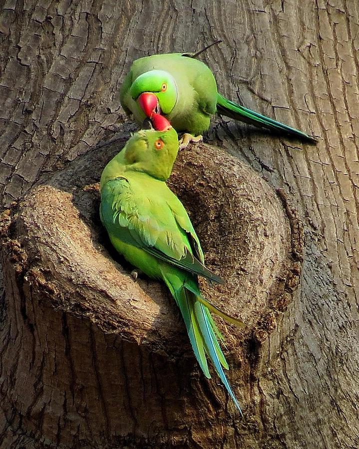 Love Birds by Bart Blumberg