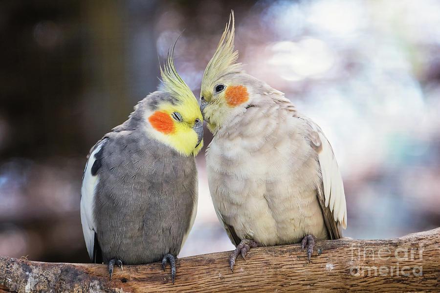 Love Birds by Stephanie Hayes