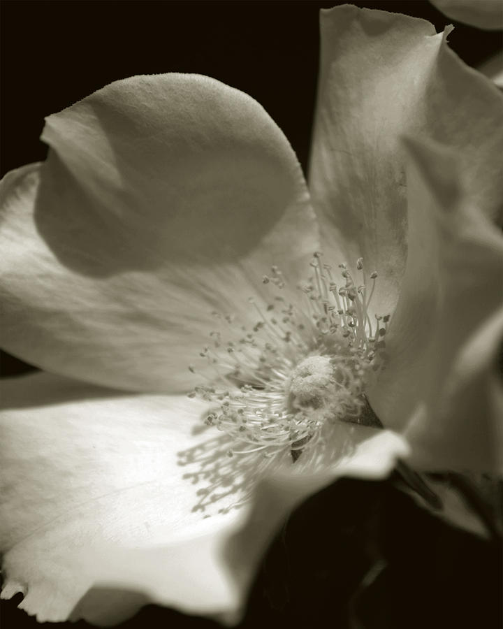Flower Photograph - Love By The Moon by Amanda Clark