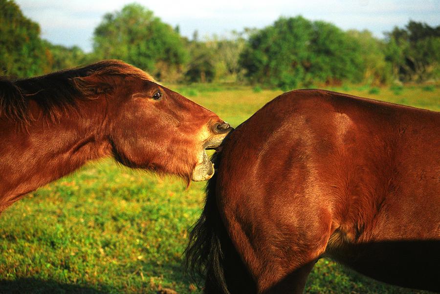 Horses Photograph - Love Hurts by Debra Raskin