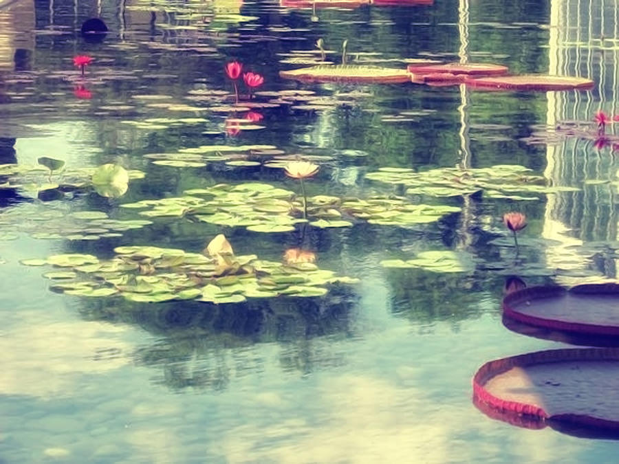 Reflection Photograph - Love Is A Place by Angela King-Jones