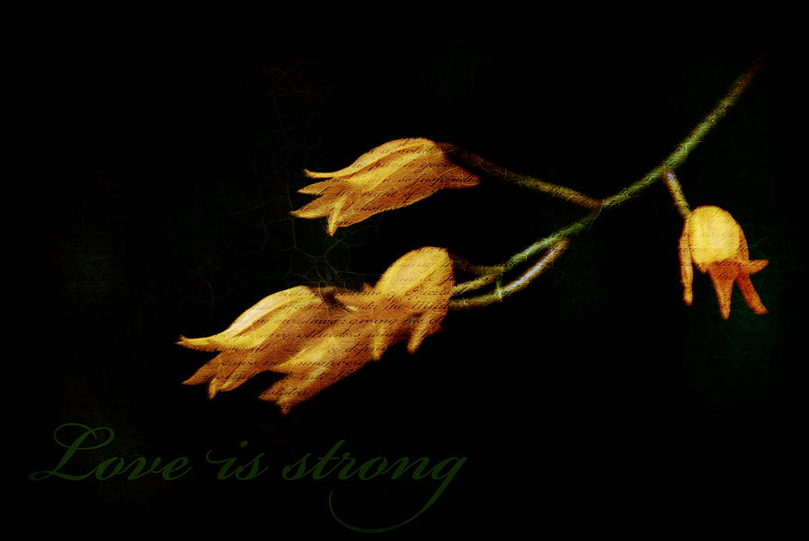Illustration Photograph - Love Is Strong by Valmir Ribeiro