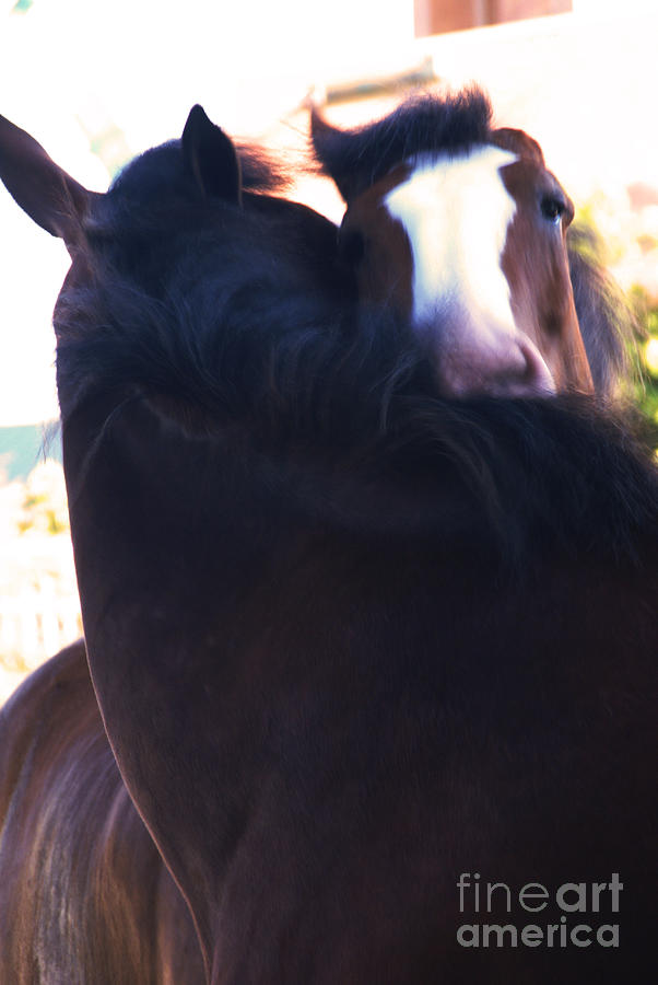 Horse Photograph - Love by Linda Shafer