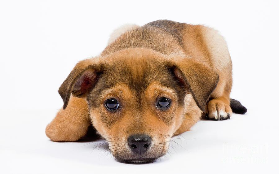 Puppy Photograph - Love Me Puppy by Dean Birinyi