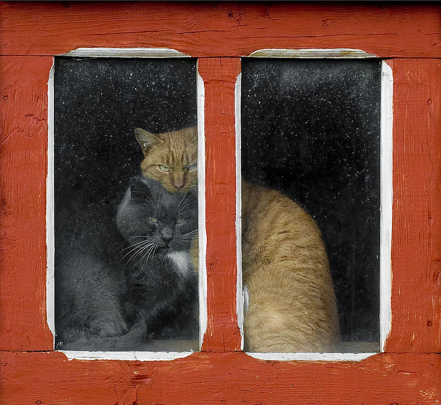 Cats Photograph - Love by Mihnea Turcu