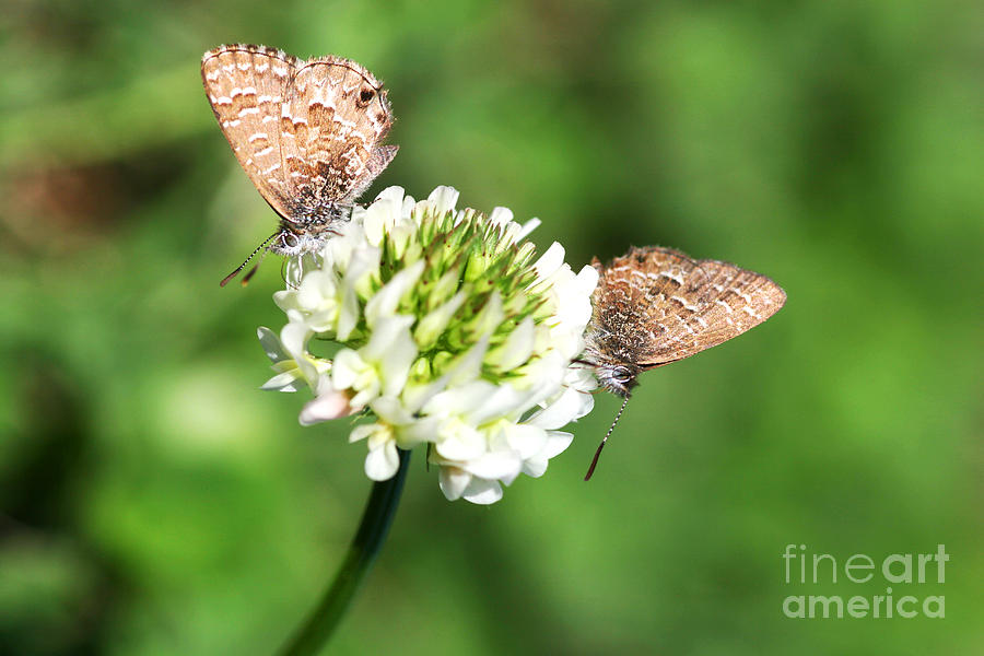 Insects Photograph - Love Moths by Jorgo Photography - Wall Art Gallery