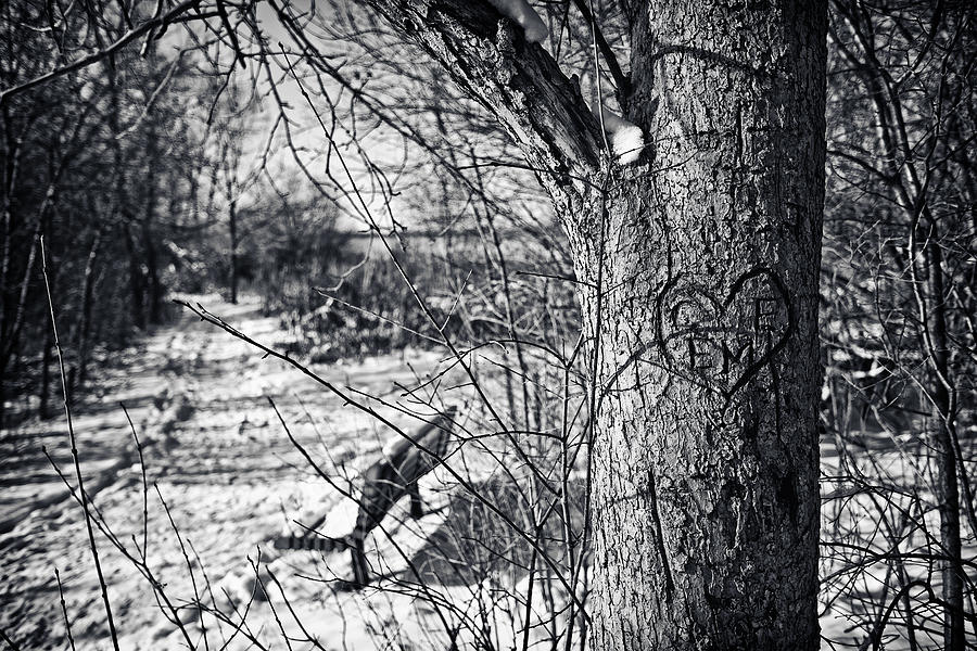 Wehr Nature Center Photograph - Love On A Tree by CJ Schmit