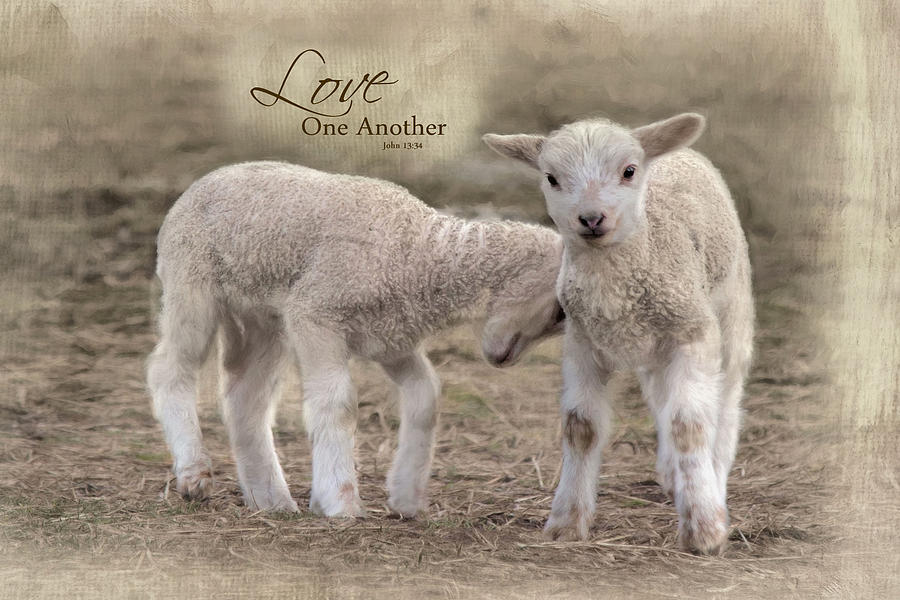 Love One Another by Robin-Lee Vieira