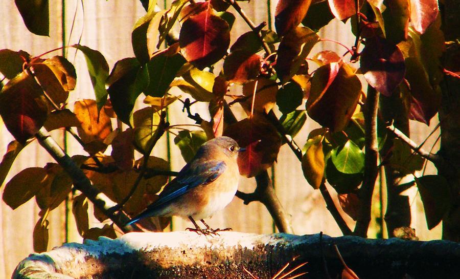 Love To See You Here Colorful Bird Photograph by Nereida Slesarchik Cedeno Wilcoxon