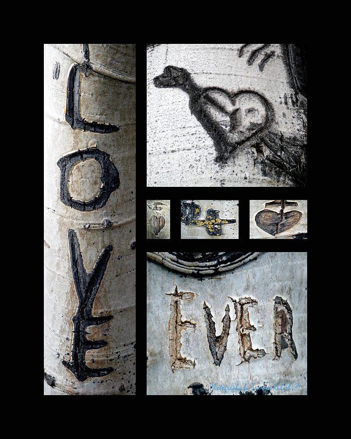 Valentine's Day Photograph - Love Written in the Trees by Tamara Kulish