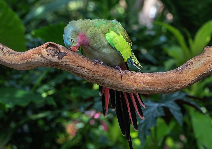 Lovebird by John Poon