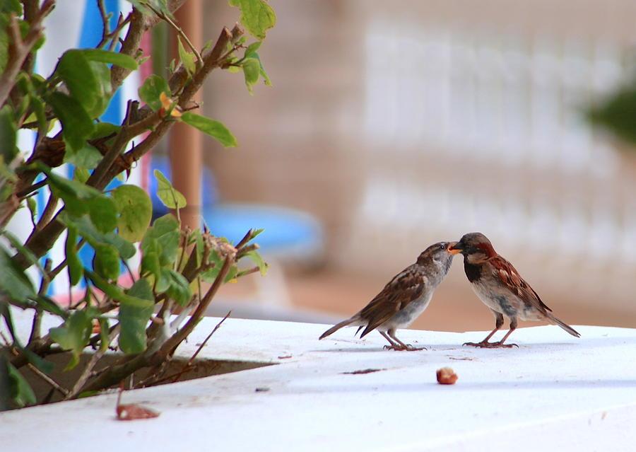 Lovebirds Photograph by Heidi Horowitz