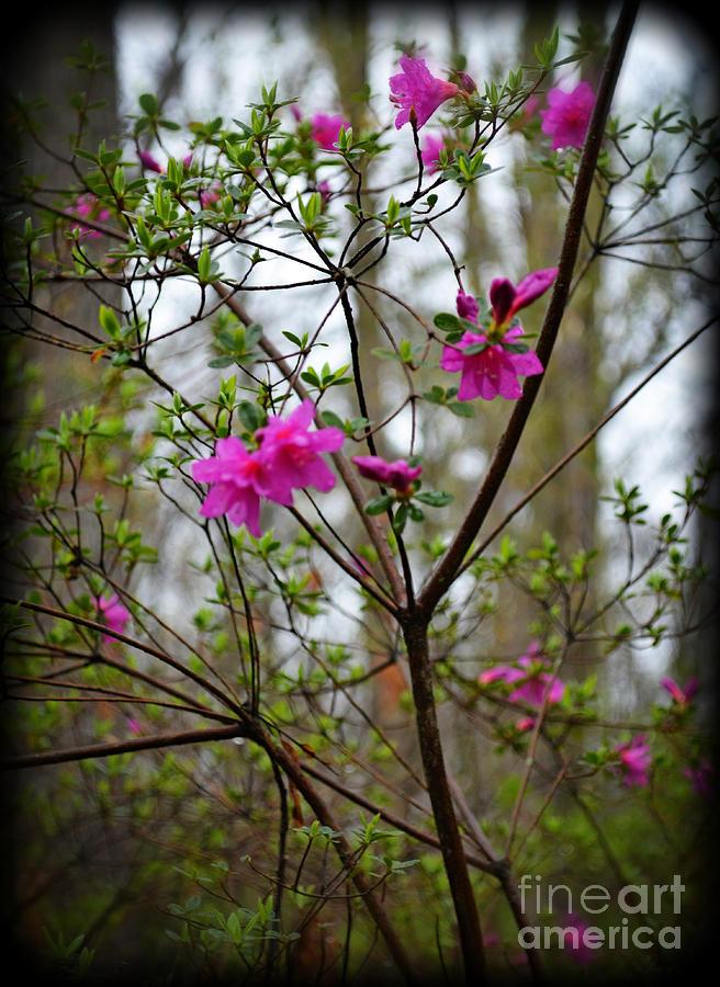 Botanical Photograph - Lovely Bright Pink Flowers by Eva Thomas
