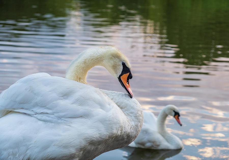 Bird Photograph - Lovely Couple by Iordanis Pallikaras