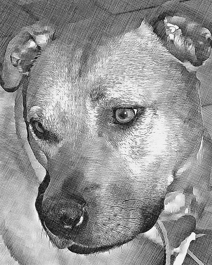 Dog Drawing - Lovely Dog by Lucia Sirna