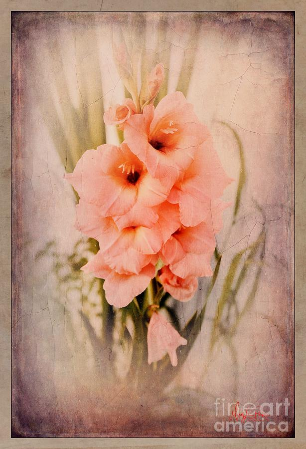 Photograph Photograph - Lovely Gladiolus by MaryLee Parker