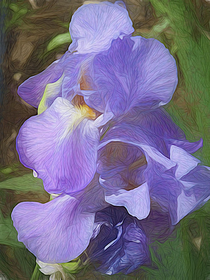 Lovely, Iris by Renette Coachman