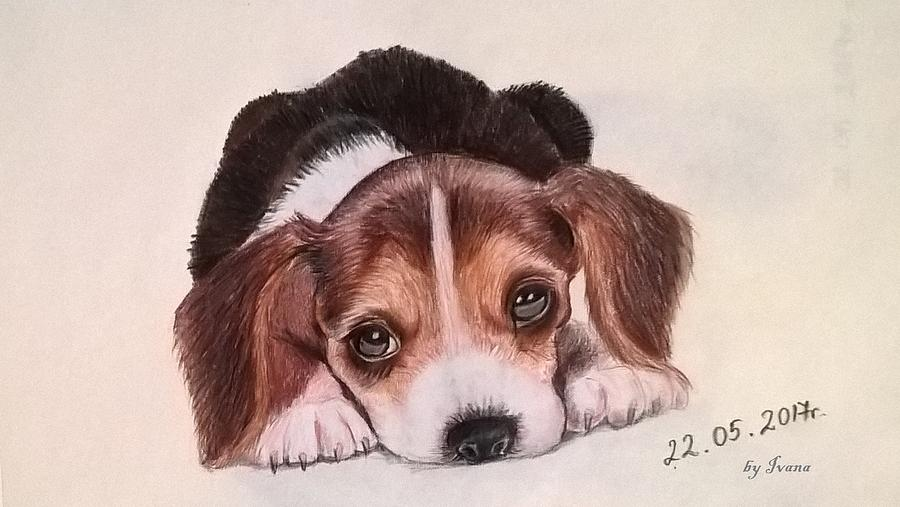 Puppy Drawing - Lovely Pet by Ivana Koleva