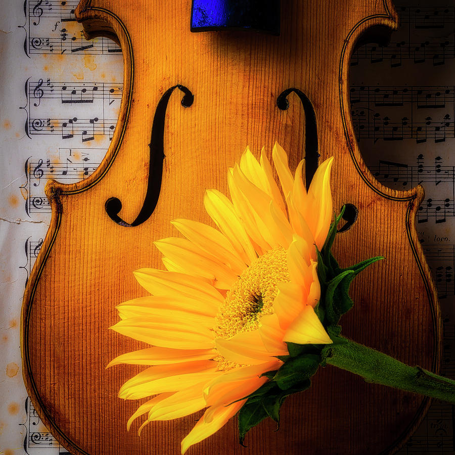 Lovely Sunflower With Old Violin