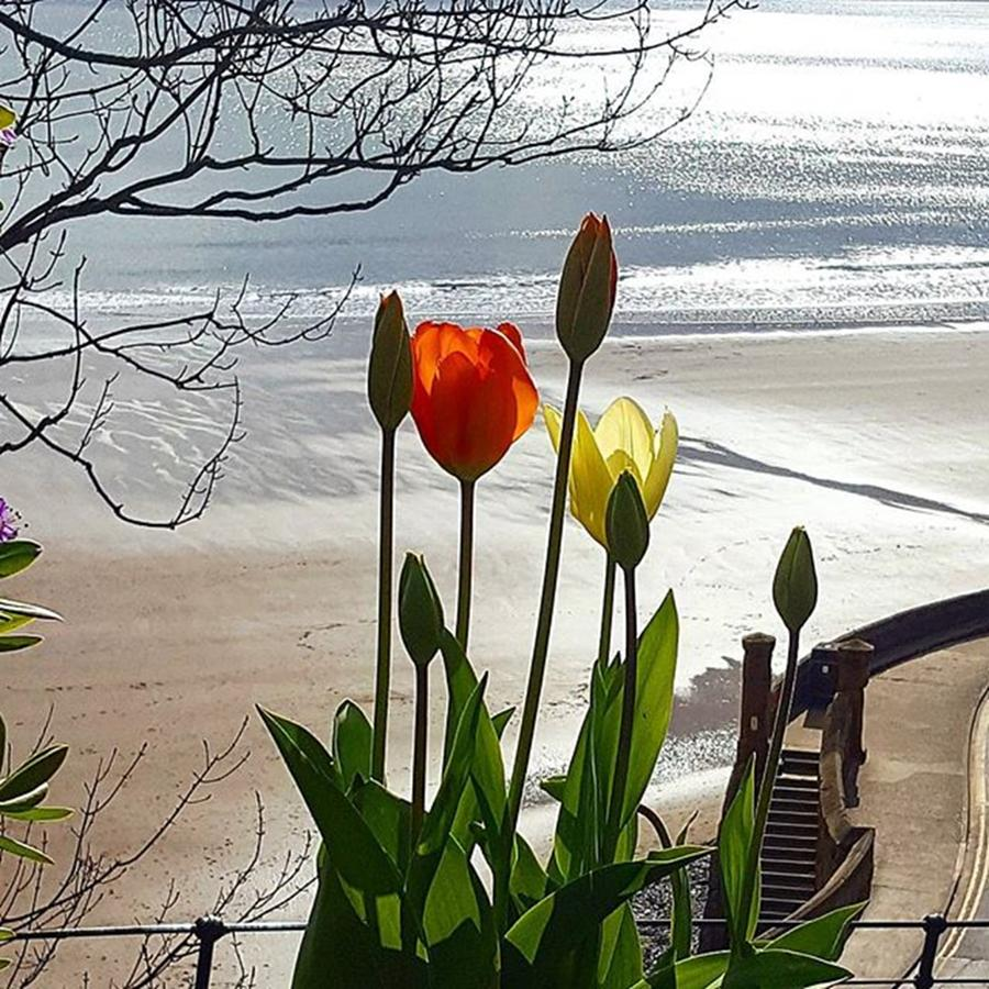 Scarborough Photograph - Lovely Walk In #scarborough, Love The by Dante Harker