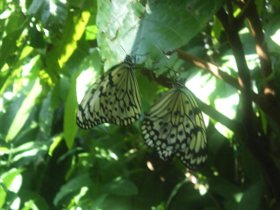 Nature Photograph - Loverfly by Sarah Ann Henderson