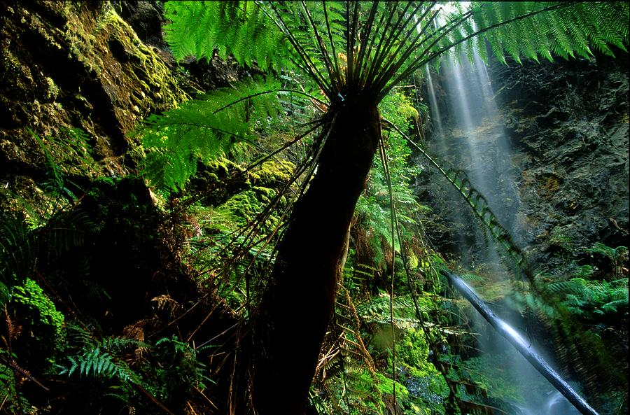 Fern Photograph - Lovers Falls by Andy Townsend