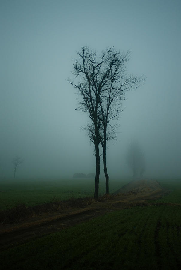 Tree Photograph - Lovers by Torchiam Sun