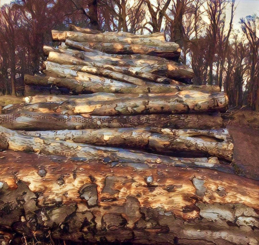 Loving the Forest  by Colette V Hera Guggenheim