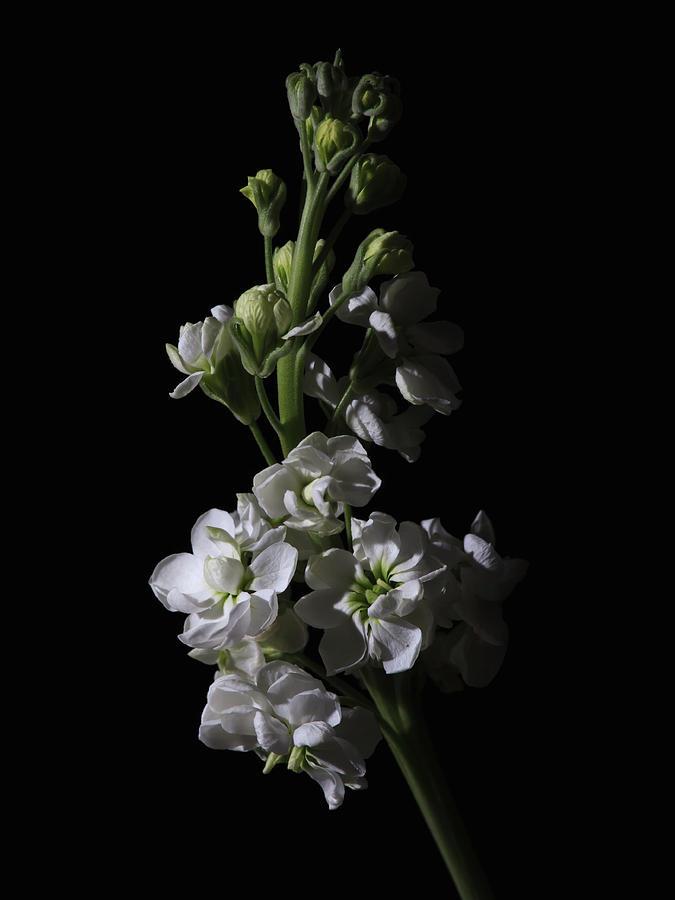 Low Key Flowers Photograph