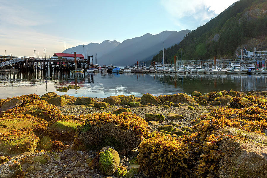 Horseshoe Bay Photograph - Low Tide At Horseshoe Bay Canada by David Gn
